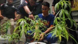 Terdakwa Ardian Aldiano (tengah) saat ditangkap polisi pada 4 Maret lalu karena menanam ganja. (ANTARA Jatim/ Didik Suharton