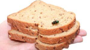 Ilustrasi lalat hinggap di makanan. (Shutterstock)