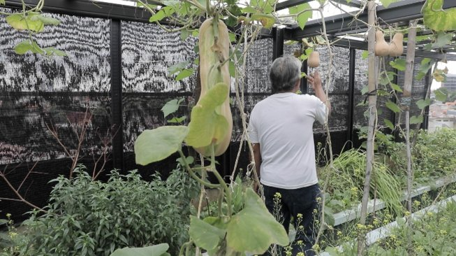 Urban Farming di Jakarta Selatan (Suara.com/ Adit Rianto)
